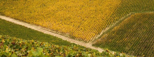cropped-chablis-blog1.jpg